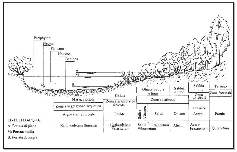 fig. 29. Sezione tipo di un fiume con esemplificate le comunità vegetali possibili